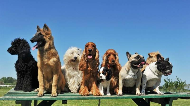 10 Razas de perros más inteligentes