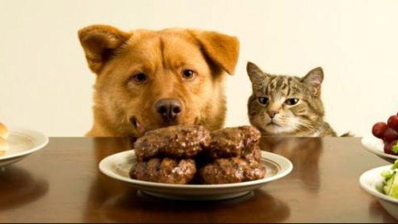 Alimentos perjudiciales para perros