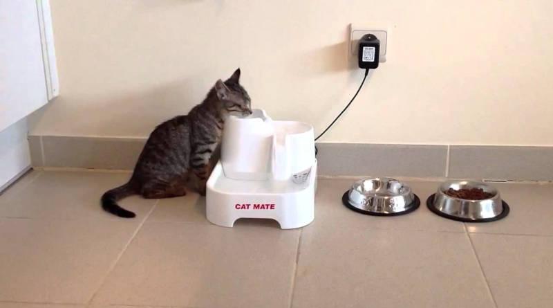 bebederos para gatos