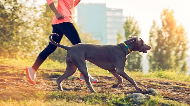 Collar antipulgas para perros