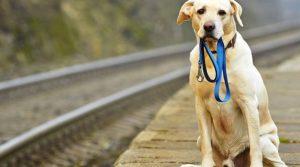Cómo encontrar un perro perdido