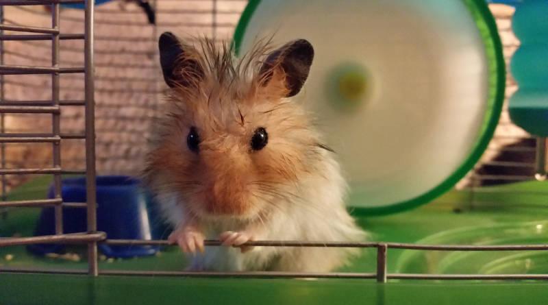 Jaulas para hamsters