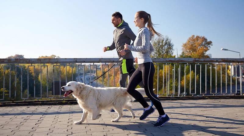 perros para corredores