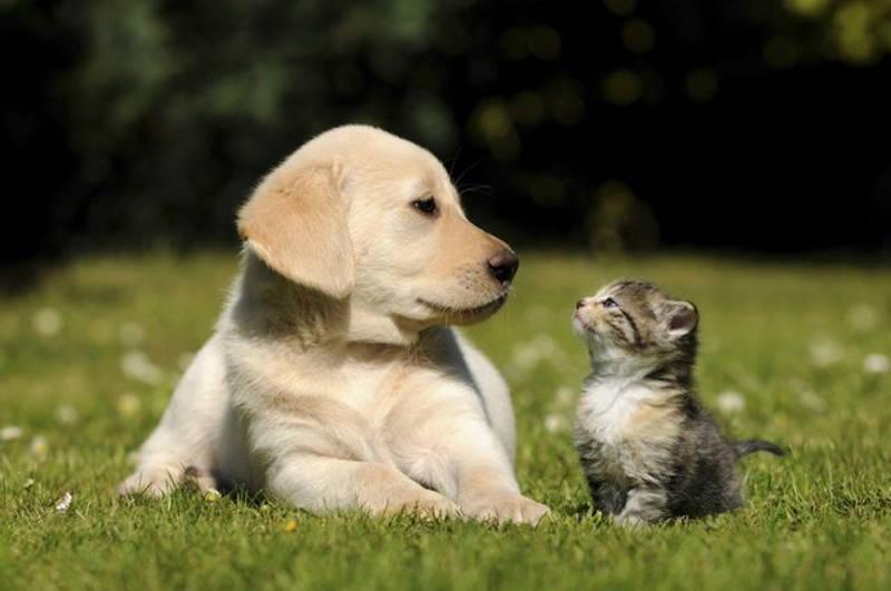 cosas en común entre perros y gatos