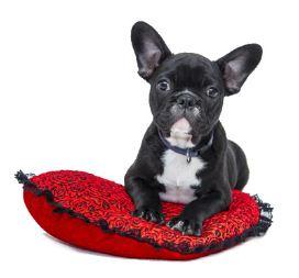 perro descansando sobre una almohada