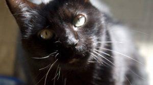 Por qué los gatos tienen bigotes