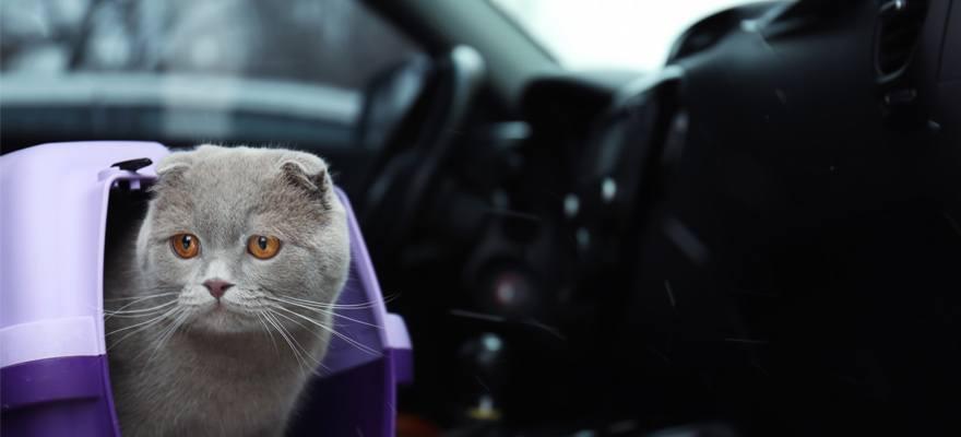 viajar transportin gatos