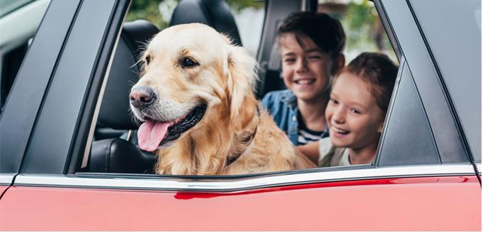 viaje por carretera con su perro