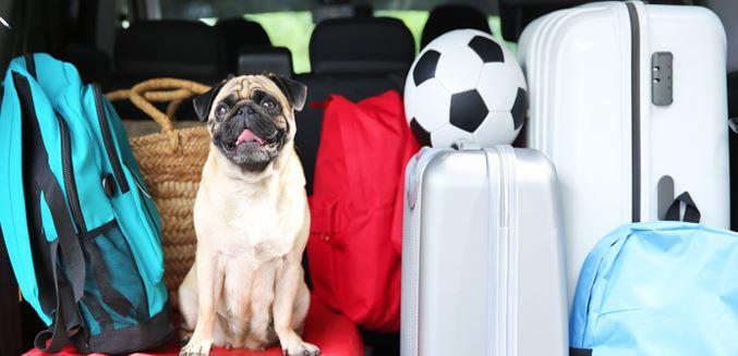 viaje en coche con un perro