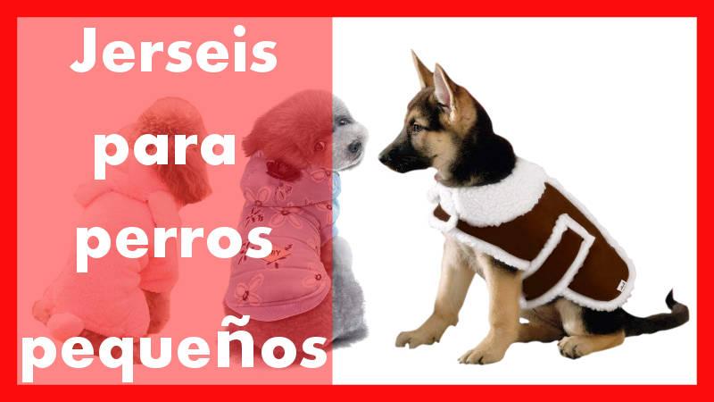 jerseys para perros pequeños